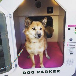 Dog Parker with Dog